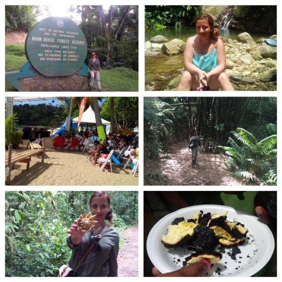 rainforest roast breadfruit